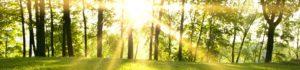 Zomer Tjaarda Oranjewoud